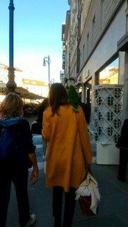 green parrot walking.jpg