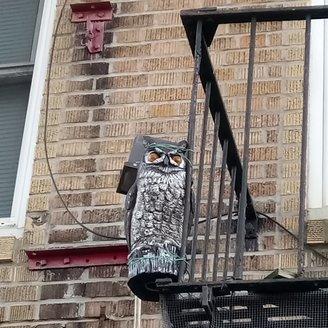fake-owl-DSC_2260.JPG
