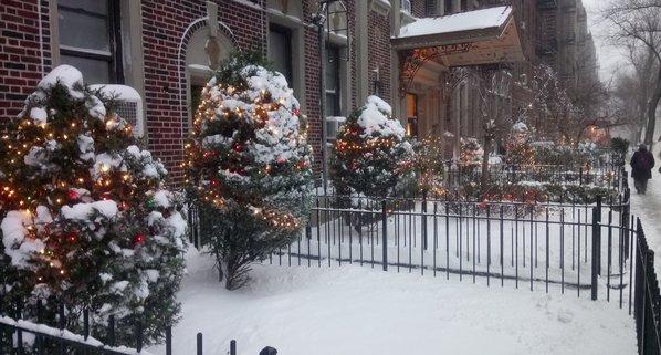 xmas-trees-snow-DSC_2610.JPG