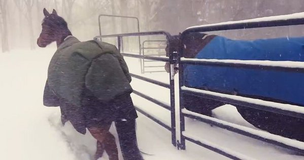 horses-hate-snow-jpcicisco-fb__700-png__700.jpg